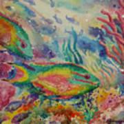 Redband Parrotfish Art Print