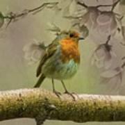 Redbreast Bird Art Print