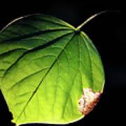Redbud Leaf Art Print