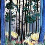 Redesdale Forest Art Print