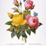 Redoute: Roses, 1833 Art Print