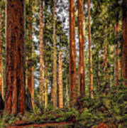 Redwood Forest Landscape Art Print