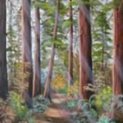 Redwood Path Art Print