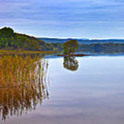 Reeds And An Islet In Lough Macnean Art Print