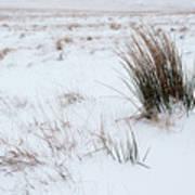Reeds And Snow Art Print