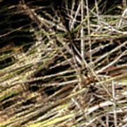 Reeds Reflected Art Print