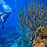 Reef Dive Art Print