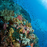 Reef Scene With Corals And Fish Art Print