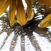 Reflected Yellow Petals Art Print