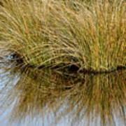 Reflecting Reeds Art Print