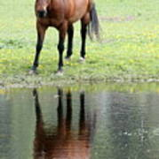 Reflecting Horse Near Water Art Print