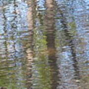 Reflecting Trees Art Print
