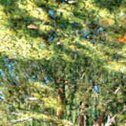 Reflecting Trees On Quiet Pond Art Print