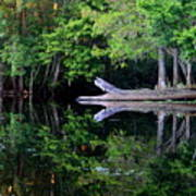 Reflection Off The Withlacoochee River Art Print