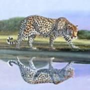 Reflection Stalk Art Print