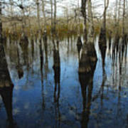 Reflections At Big Cypress Art Print