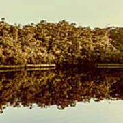 Reflections From Cockle Creek  Art Print