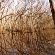 Reflections In The Swamp Art Print