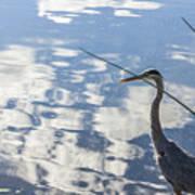 Reflections Of A Bird Art Print