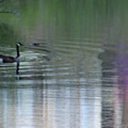 Reflections Of A Canada Goose Art Print