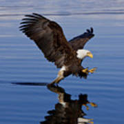 Reflections Of Eagle Print by John Hyde - Printscapes