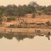 Reflections On Safari Art Print