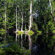 Reflections On The Ocklawaha River  Art Print