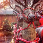 Reindeer At Copenhagen Christmas Market Art Print