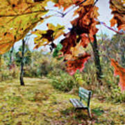 Relax And Watch The Leaves Turn Art Print