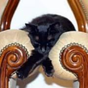 Relaxed Black Cat Sleeping Between Two Chairs Art Print