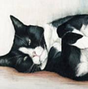 Relaxed Tuxedo Art Print