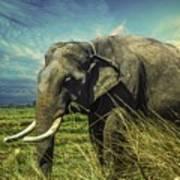 Remember Elephant Art Print