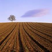 Remote Tree In A Ploughed Field Art Print
