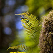 Renewal Ferns Print by Mike Reid