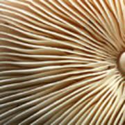 Repetishroomin Art Print