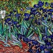 replica of Van Gogh irises Art Print