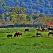 Rescue Horses Art Print