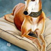Rescued Greyhound Art Print by Sandra Chase