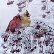 Resilient Reds - Northern Cardinals Art Print