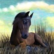 Resting Foal Art Print
