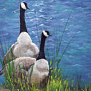 Resting Geese Art Print