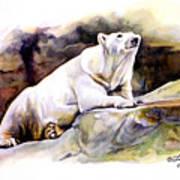 Resting Polar Bear Art Print