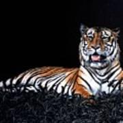 Resting Tiger Art Print