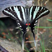 Resting Zebra Swallowtail Butterfly Square Art Print