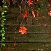 Retaining Wall In Autumn Art Print
