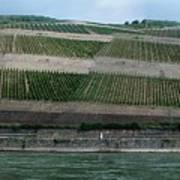 Rhine Valley Vineyards Panorama Art Print