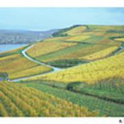 Rhine Vineyard Art Print