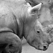 Rhino Profile Art Print