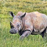 Rhinosceros Art Print