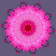 Rhoda Mandala Art Print